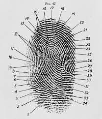 Forensic Experts Are Used to Defend Criminal Cases